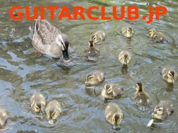banner of guitarclub.jp